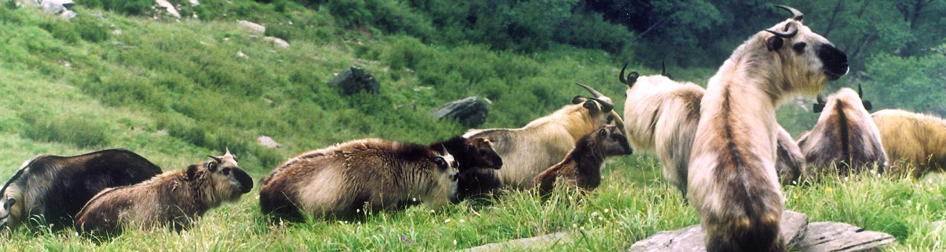 四川唐家河国家级自然保护区